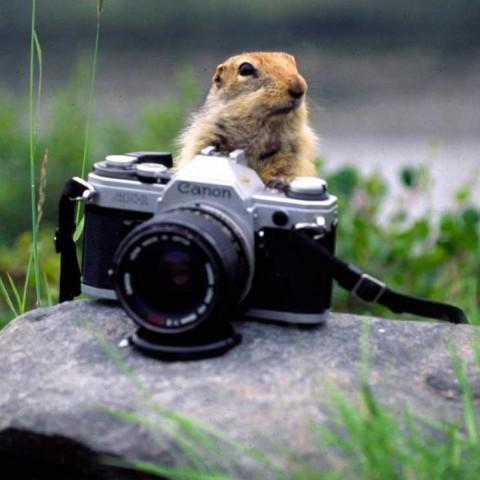 Sic Sic Photographer