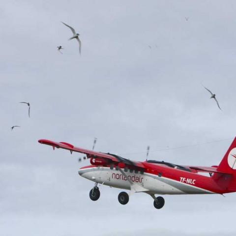 Wings at the Arctic Circle
