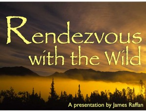 Rendezvous with the Wild