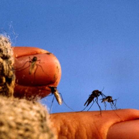 Bug Fingers