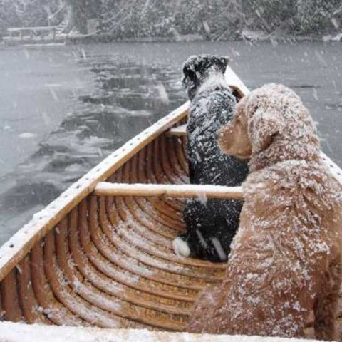Snow Dogs Canoe